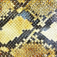 The Amazing Snakeheads