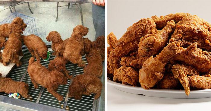 Lookalike Poodle Chicken Wings Puppies Dinge die wie Dinge aussehen