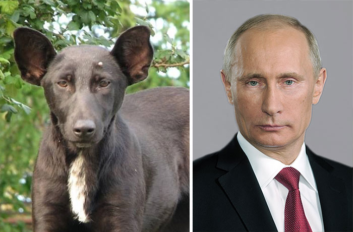 Lookalike Verwechslung Putin Hund dog