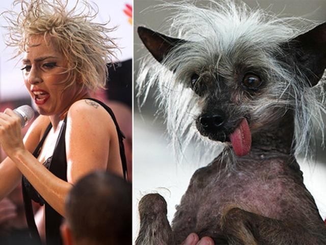 lady gaga sieht aus wie ein hund lookalike verwechslung ähnlichkeit