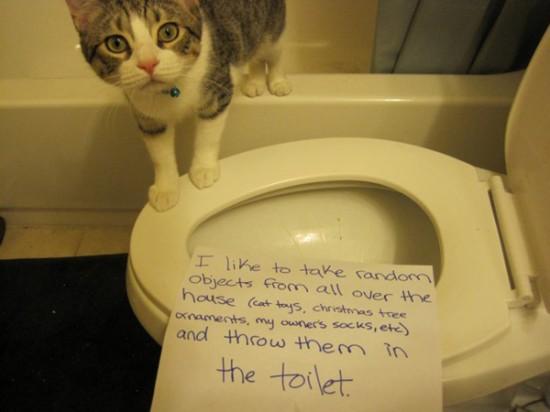 Geständnis Katzen Zettel Bekenntnisse Haustiere Bekenntnistag