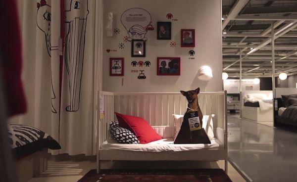 HUnde bei Ikea 7