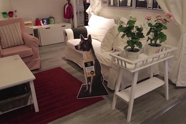 Hunde bei Ikea 1