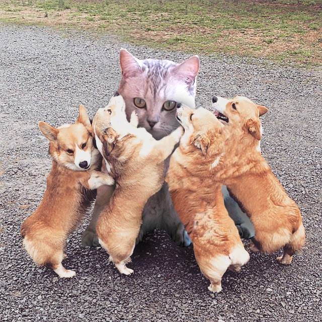 katze und hundebabies miniatur corgy welpen