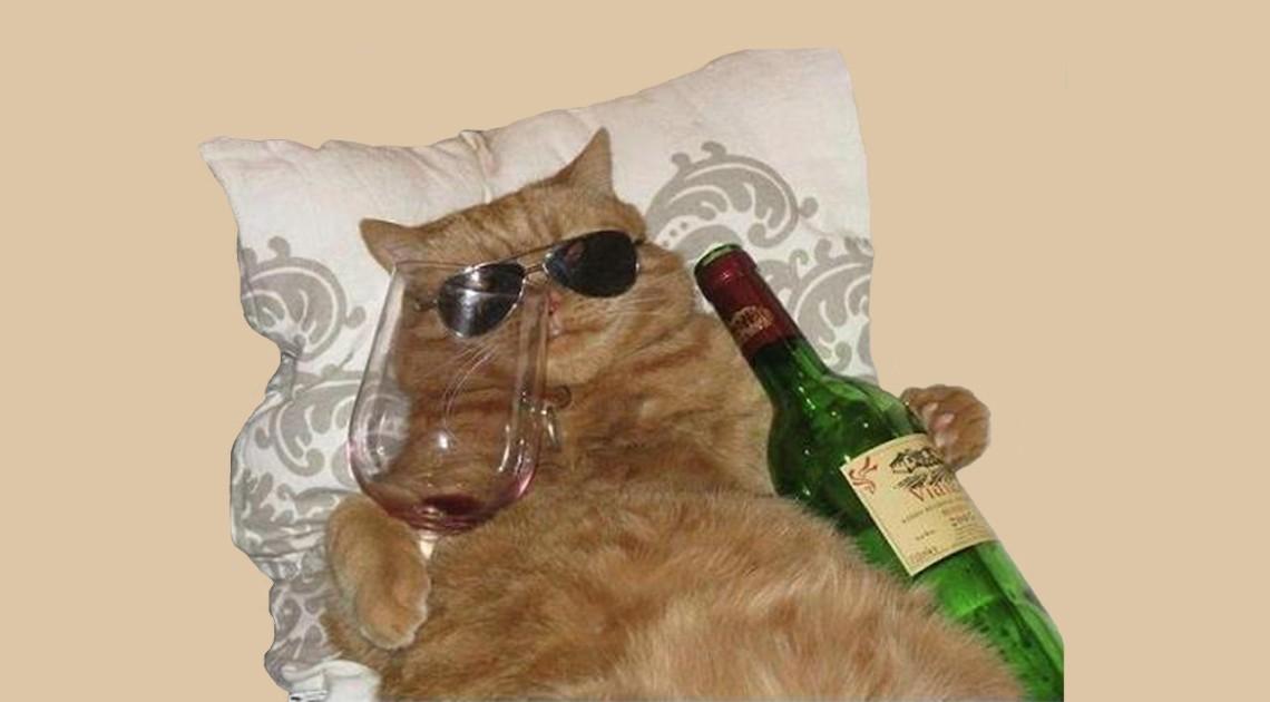 In Gesellschaft trinkt es sich besser Katzenwein betrunkene Katzen