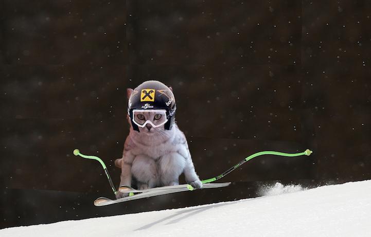 katze auf snowboard sportliche tiere lustige katzenbilder