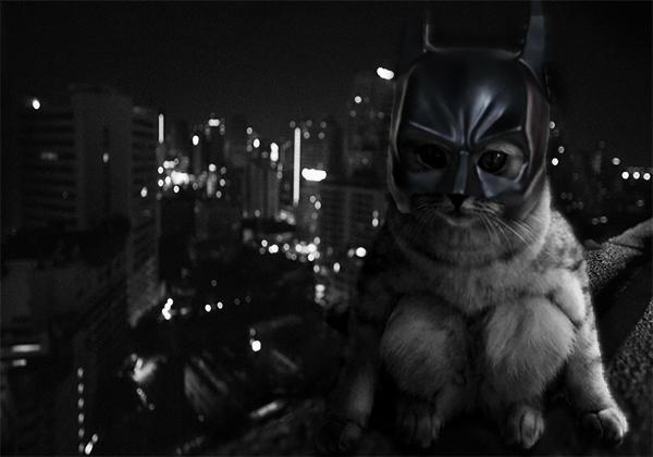batman katze superheld tiere gotham