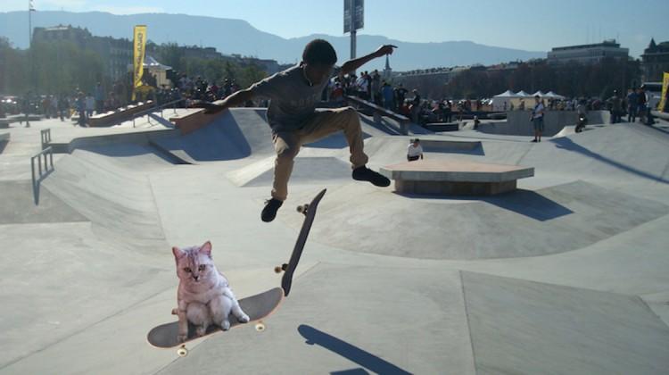 katze auf skateboard tiere fahren skateboard photoshop battle