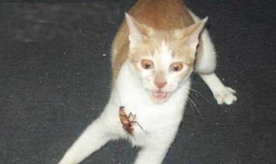 kakerlaken fetisch insekte krabbeln sexy