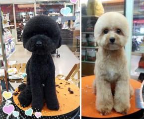 geometrische hunde doppelpack