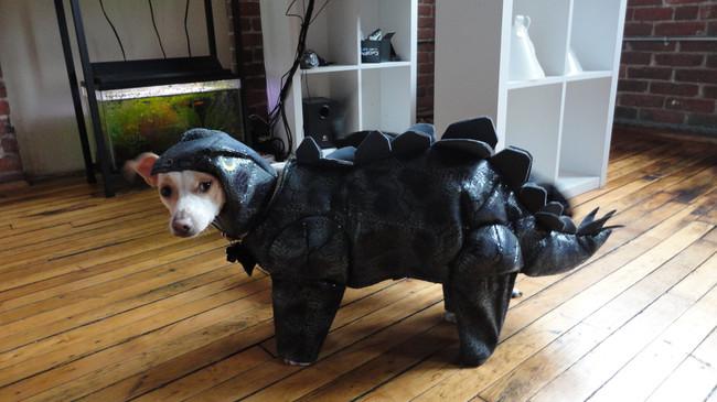 Jurrassic Dog