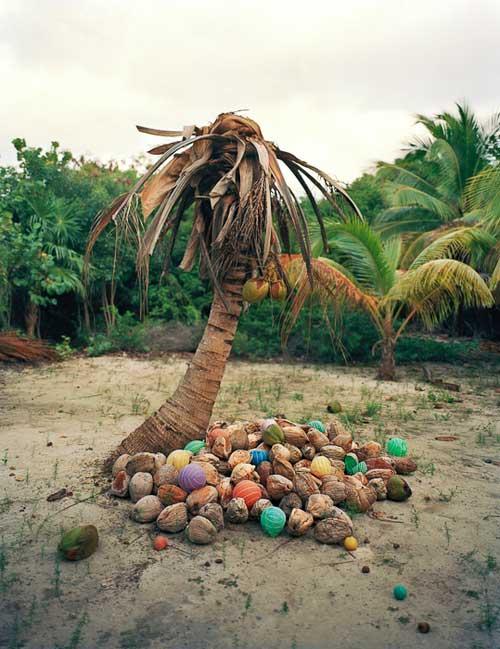 Alejandro Durán Washed Series Umweltverschmutzung Klimawandel Müll am Meer Kokosnüsse Palme