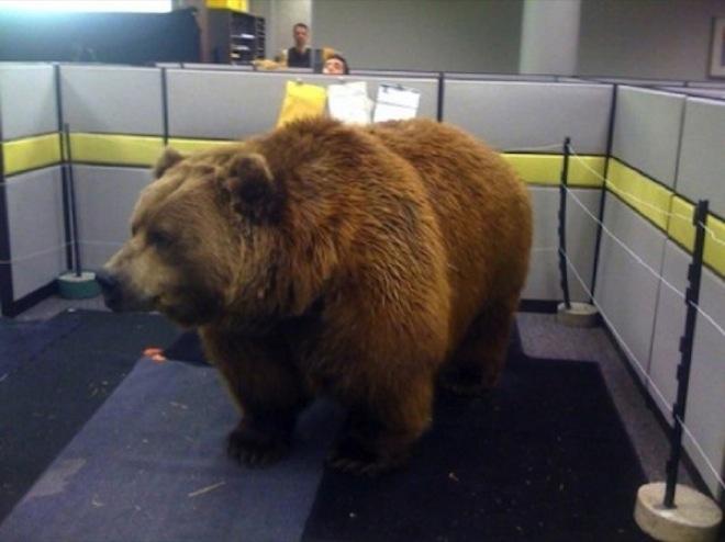 Mehr Spaß am Arbeitsplatz braunbär