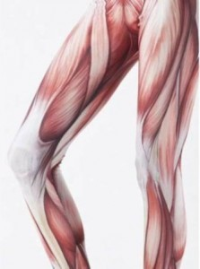 muscles print-leggings