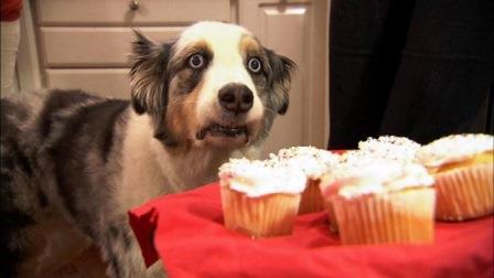 Hund und Cupcakes