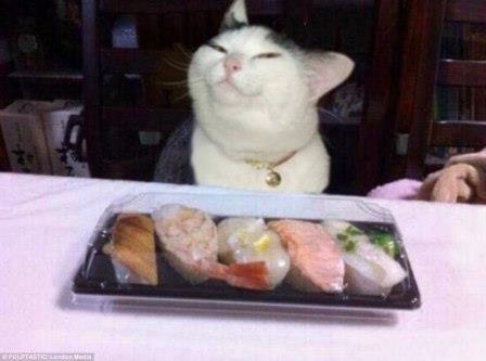 Katzen ide auf Essen starren