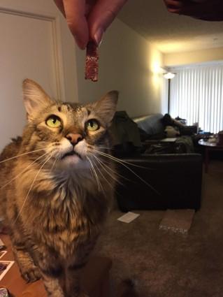 Katze und bacon