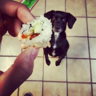 hund und Sushi Tiere die auf essen starren