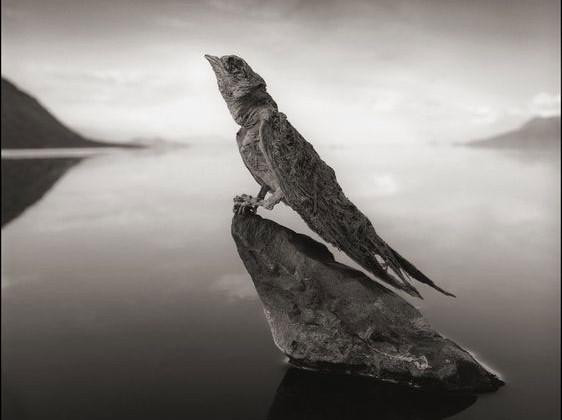 Tiere Lake Natron