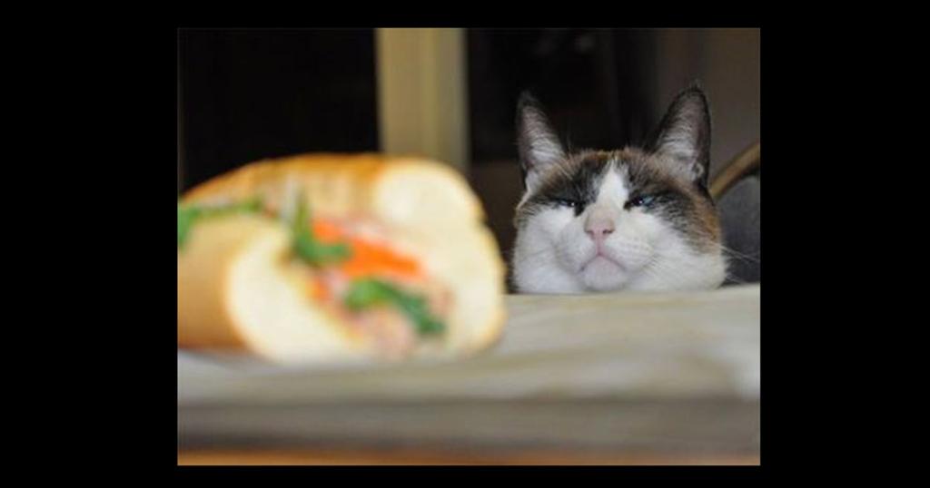 Tiere die auf Essen starren