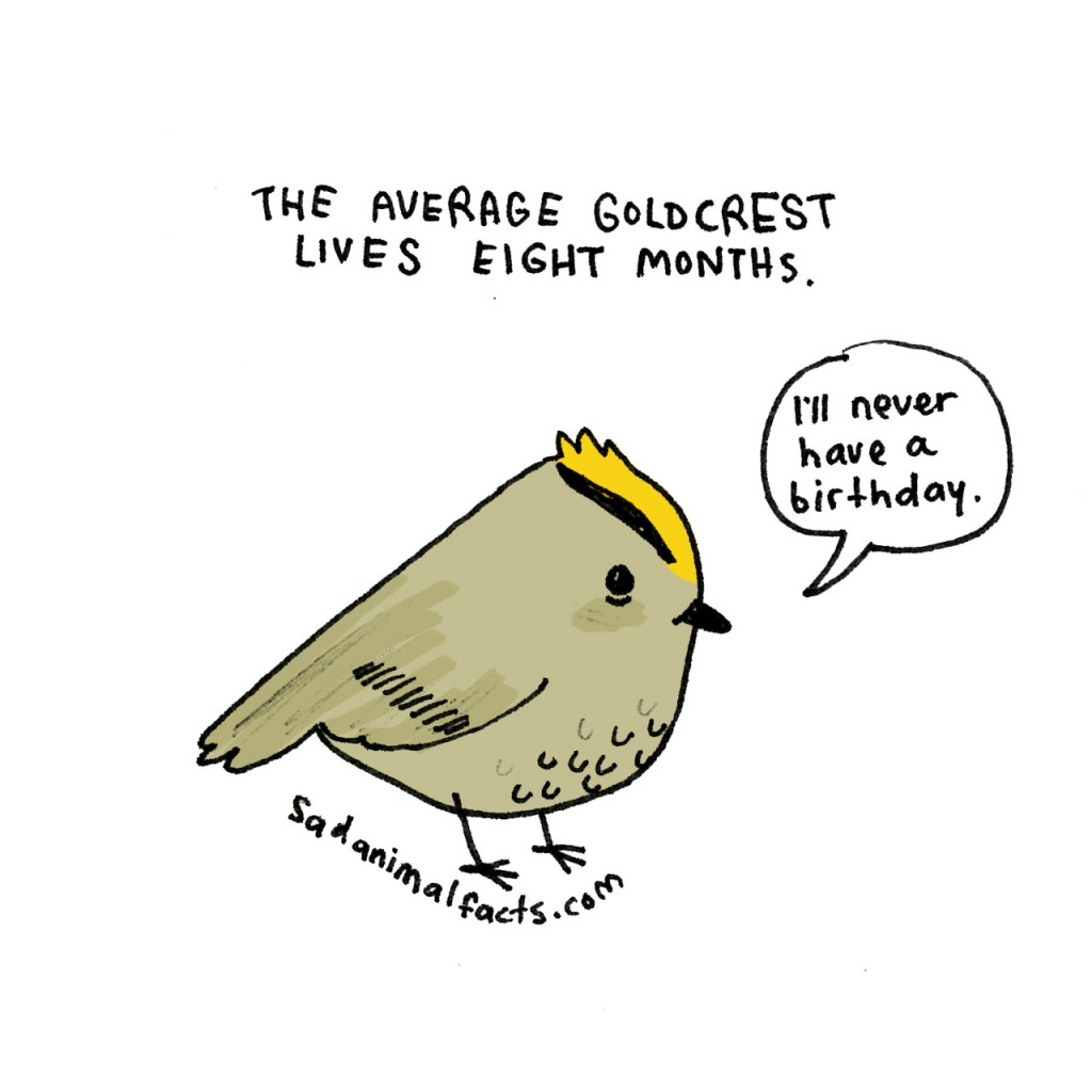 Sad Animal Facts bird