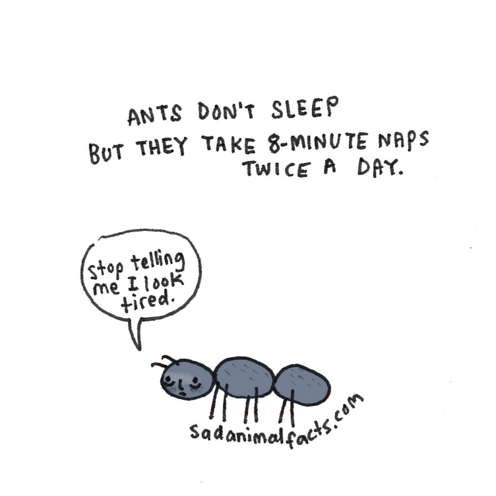 Sad Animal Facts ant