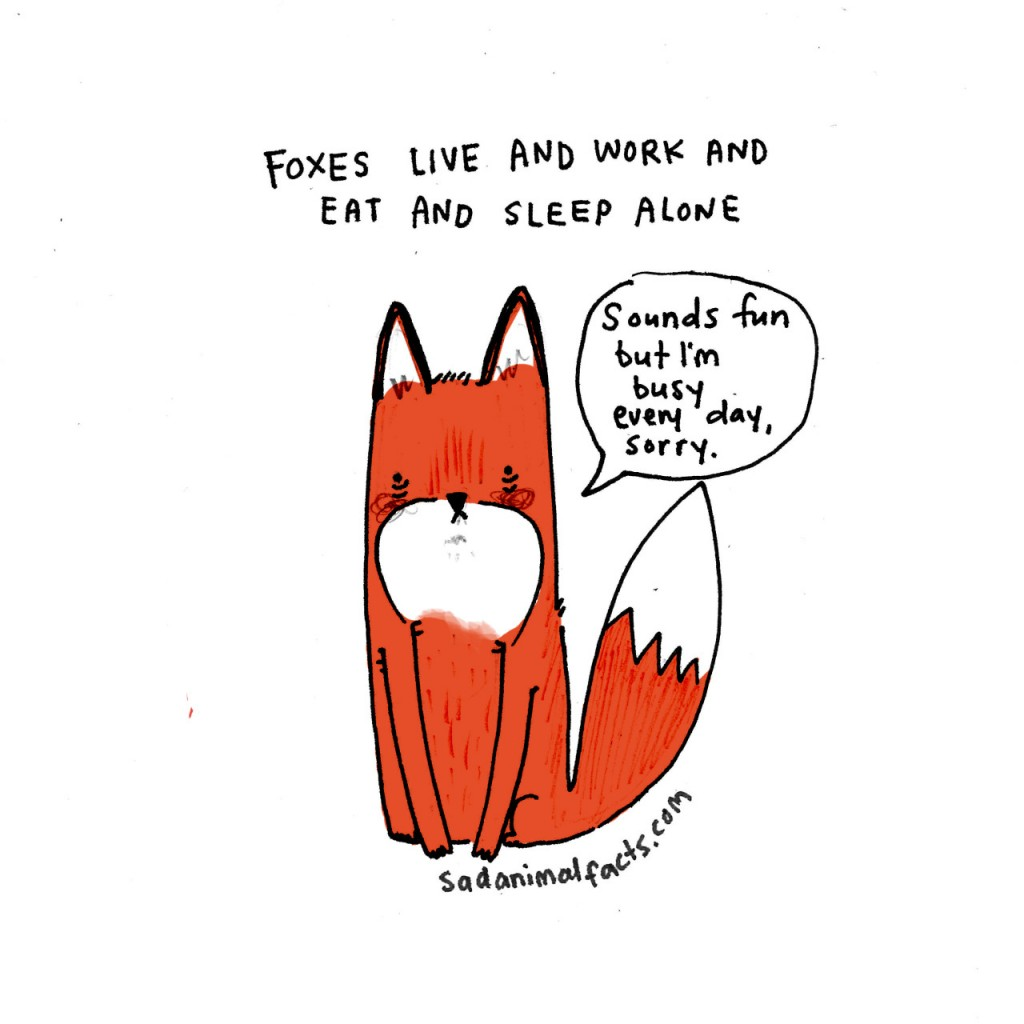 Sad Animal Facts fox