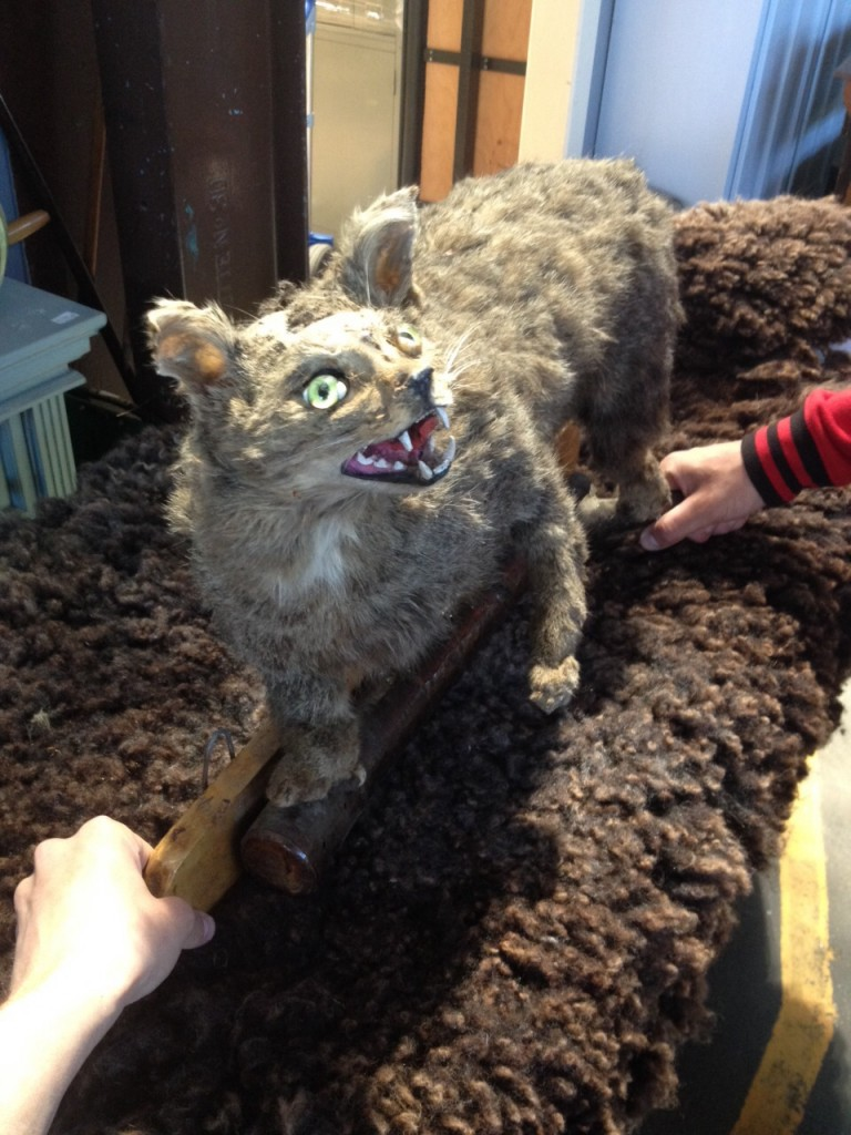 Taxidermie Whatever