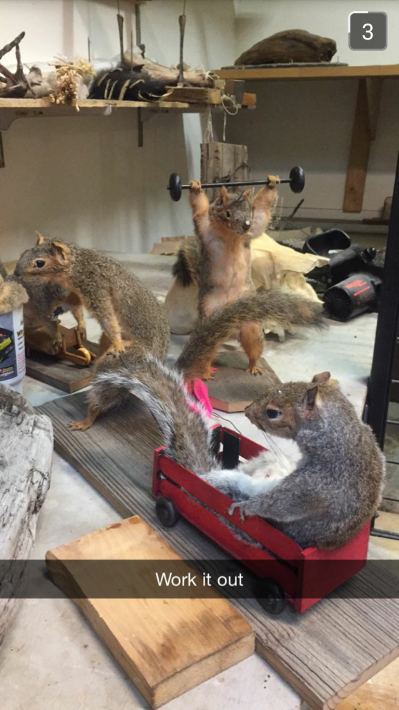 Taxidermie Dinger