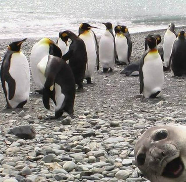 cropped-seal-photobombing