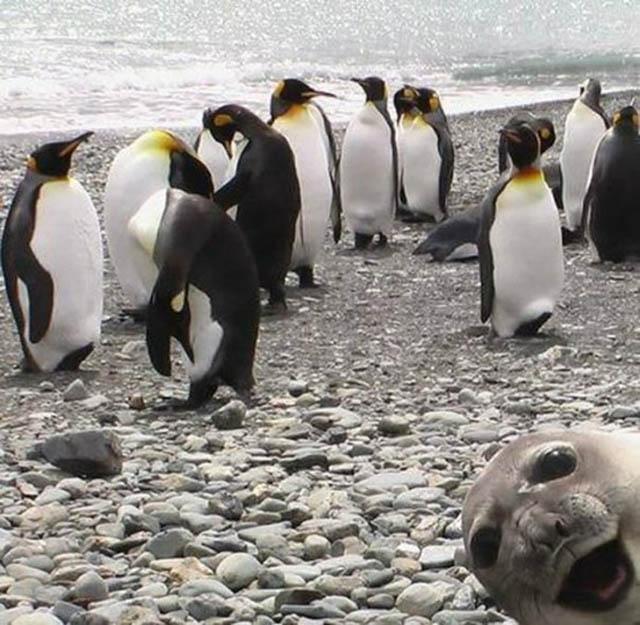 cropped-seal-photobombing