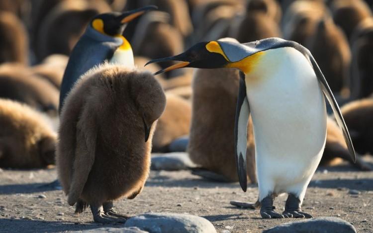 Mike-Reyfman pinguin schelte schuldig baby süß