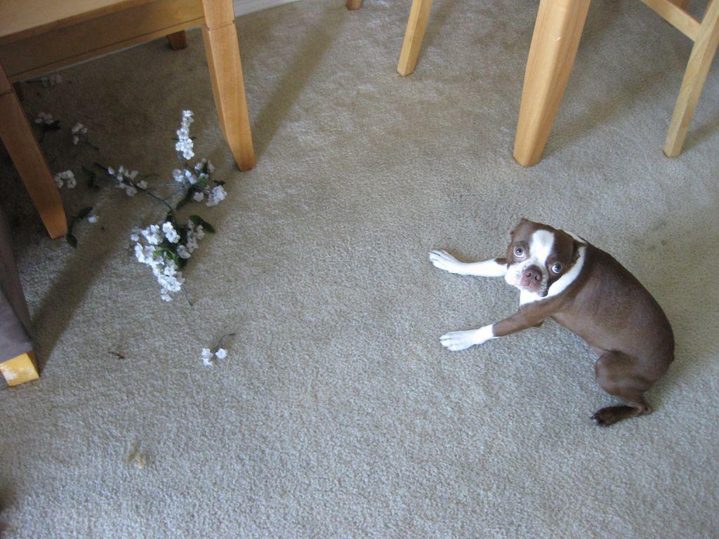 hund schlechtes gewissen dinge zerstören