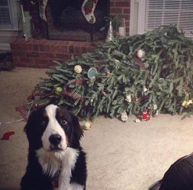 schuldbewusste tiere hund zerstört weihnachtsbaum