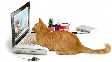 gadgets für katzen