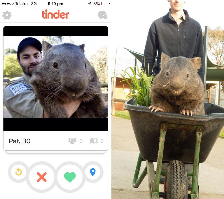 Paddy der Wombat bei tinder