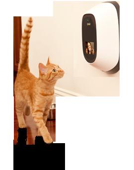side-cat