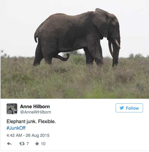 #junkoff penis vom elefanten