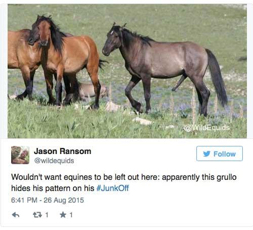 #junkoff penis eines pferdes