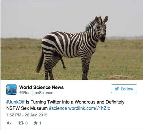 #junkoff zebra penis penen tierpenisse