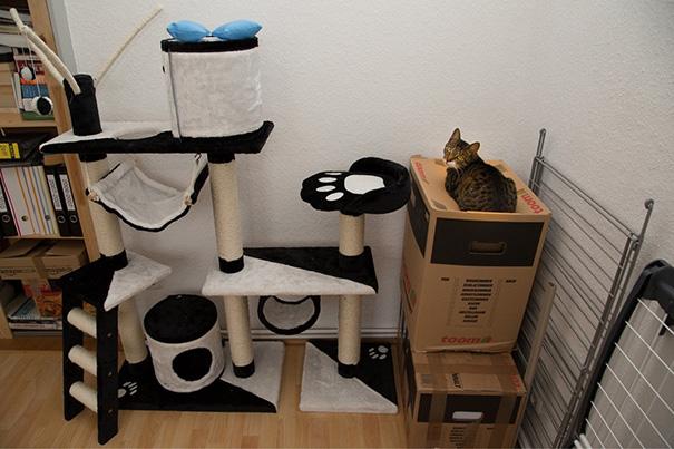 lustige katzen und pappkartons