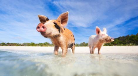 Schweineinsel Foto von CarDelMar