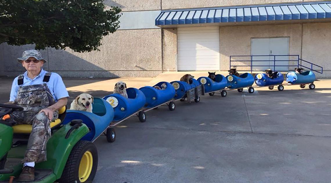 Dog Train