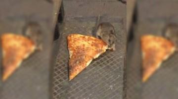 #PizzaRat