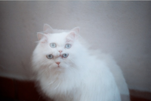 double vision cat