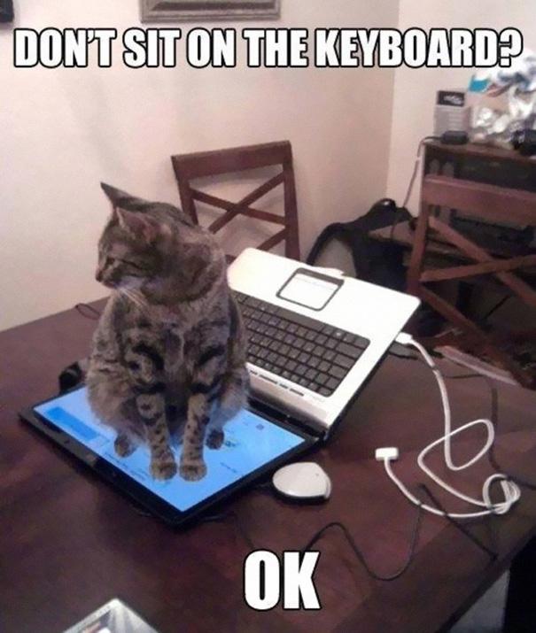 katzen sitzen immer auf laptop