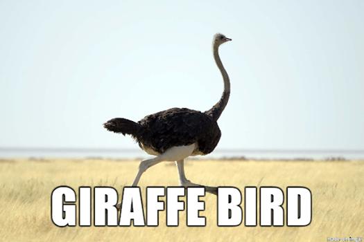 Giraffe Bird