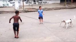 Hund hilft beim Seilspringen beitragsbild