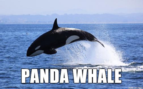 Panda Whale