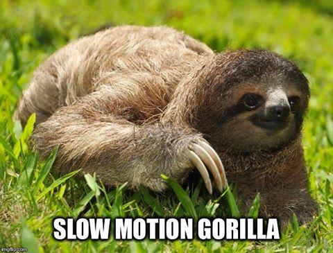 Slow Motion Gorilla